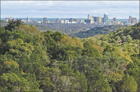 Mountain cedar trees with the Austin skyline in the background.